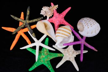 OBX Shell Store, Mix and Match Sale