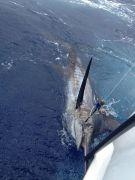Sea Creature Sportfishing photo