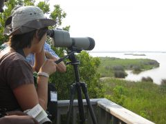 Pea Island National Wildlife Refuge photo