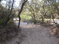 Jockey's Ridge State Park photo