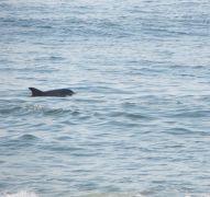 Dolphin Realty photo