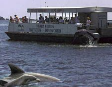 Dolphin Tours in Downtown Manteo