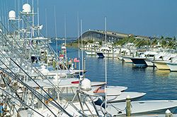 Pirate's Cove Marina photo