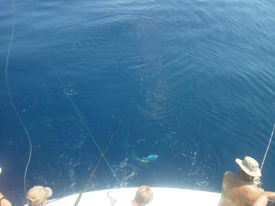 Gecko Sportfishing photo