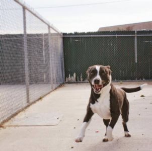 Outer Banks SPCA photo