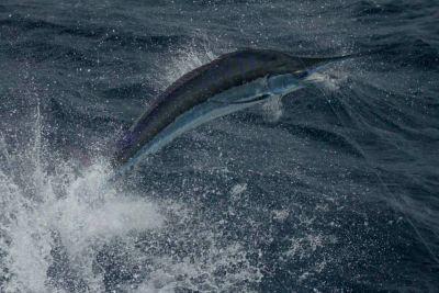 Fish Ocracoke photo