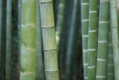 Cariloha Bamboo Outer Banks photo