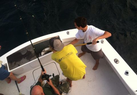 Hitman Sportfishing, Gulfstream Trips with Captain James