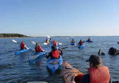 Ride The Wind Surf Shop, Mid-Morning Kayak Eco-Tours