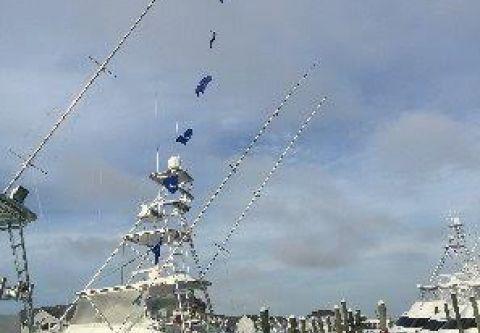 A-Salt Weapon Charters, Tournament Fishing