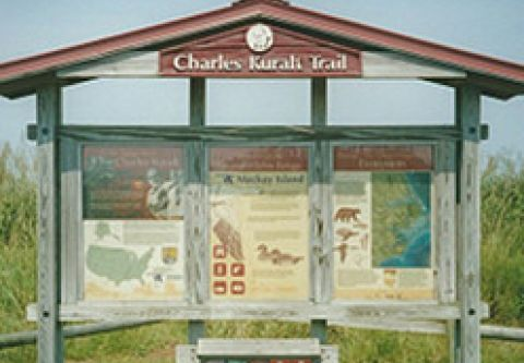 Currituck County Department of Travel & Tourism, Birding in Currituck County