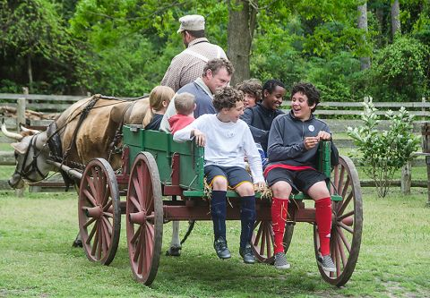Island Farm, Ox-Drawn Wagon Rides
