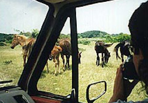 Back Country Wild Horse Safari, Wild Horse Tours