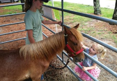 Corolla Wild Horse Museum, Kids Day at Whalehead