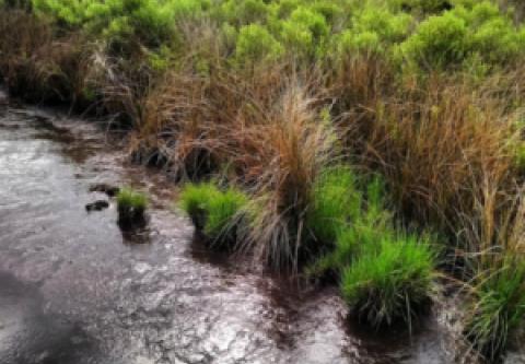 Hatteras Island Ocean Center, Marsh Madness