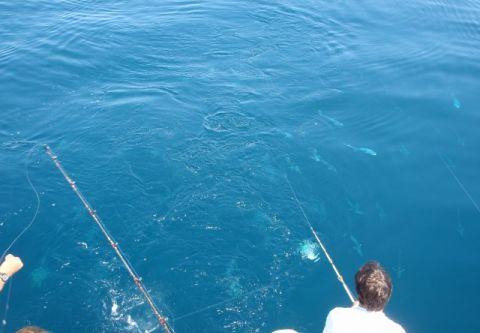 Gecko Sportfishing, Half Day Inshore Fishing on the Drumrunner