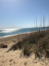 Ocean and Beach Grass
