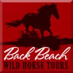Back Beach Wild Horse Tours
