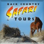 Back Country's Wild Horse Safari Tour