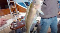 Fishing The Atlantic